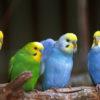 オウム病の原因や症状。鳥を飼っていたら感染する?妊婦が命を落とす。