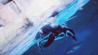 八景島シーパラダイスの原因は?ずさんすぎる!水槽の深海生物が全滅・・・